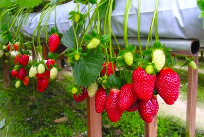đơn hangf trồng rau củ quả