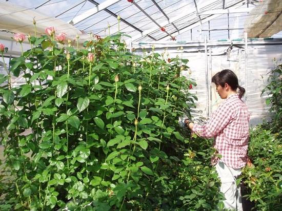 tuyển 09 nữ trồng hoa trong vườn