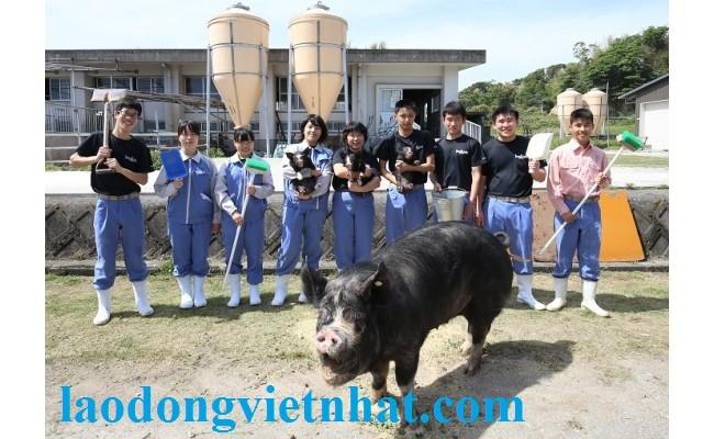 Don Hang Chan Luoi Lon